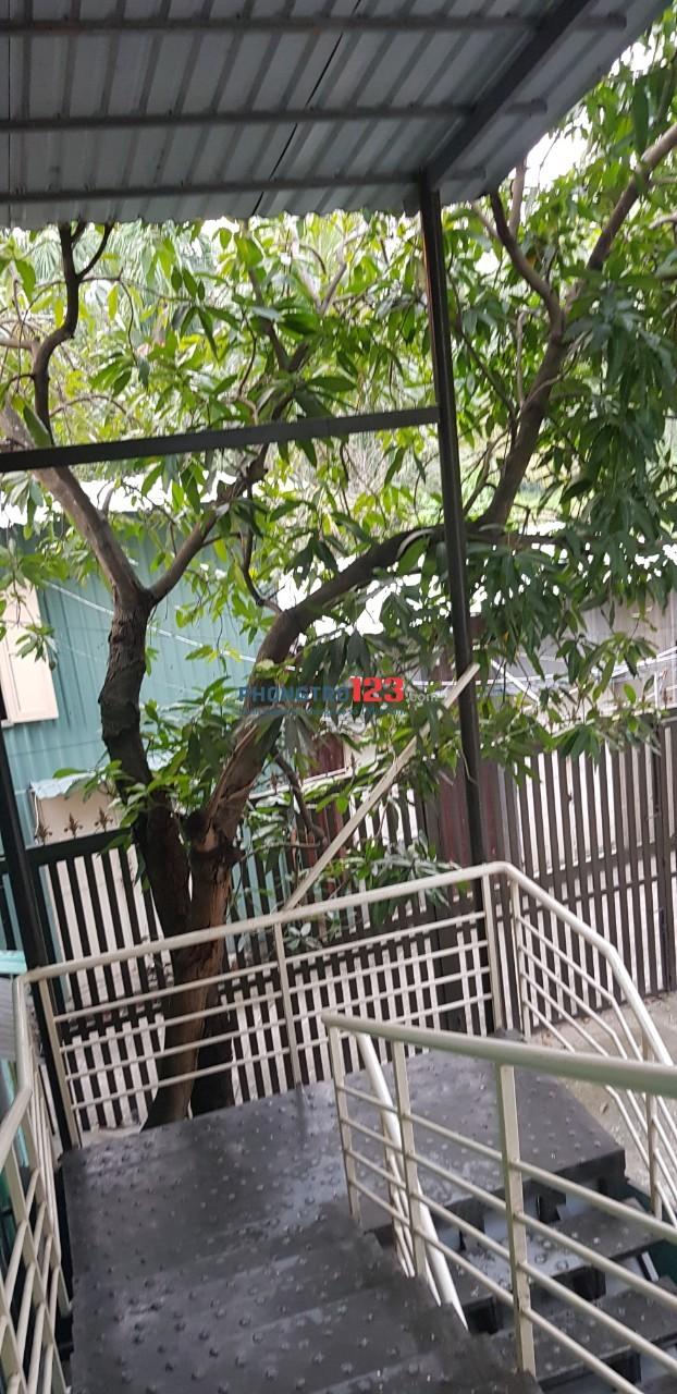 Cho thuê tầng 1 biệt thự sân vườn, có lối đi riêng