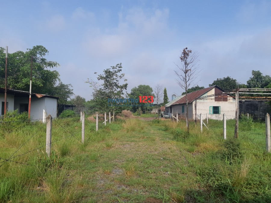 Chính chủ cho thuê khu đất 3682m2 có thể xây dựng gần TL8 Xã Hòa Phú Củ Chi